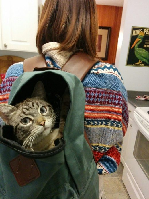Cat in a backpack